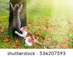 Stock photo two cats climbs a tree in the park 536207593