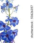 Bright Blue Delphinium Flower ...