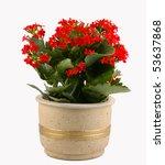 red flowering pot plant   Shutterstock . vector #53637868
