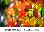 Autumn Leaves Background In...