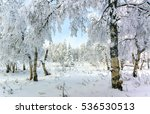 winter park birch  snow covered ... | Shutterstock . vector #536530513