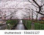 cherry blossoms along the... | Shutterstock . vector #536631127