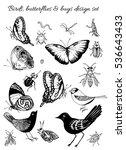 vector bugs  butterflies and... | Shutterstock .eps vector #536643433