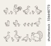 outline icons set   poultry | Shutterstock .eps vector #536648773