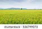 green nature landscape with... | Shutterstock . vector #536799073