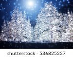 Winter Spruce Forest At Night....