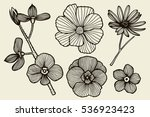 sketch of wild flowers  hand... | Shutterstock .eps vector #536923423