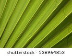 Green Leaf Of Palm Tree Textur...