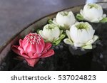 Lotus Flower  In Pond.