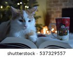 Cat   Book   Coffee