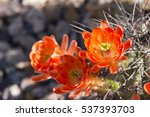 Beautiful Blooming Wild Desert...