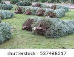 Christmas Tree Farm 7