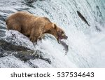 brown bear catches a salmon in... | Shutterstock . vector #537534643