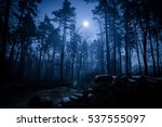 dark night forest | Shutterstock . vector #537555097