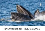 the head and the humpback whale'...   Shutterstock . vector #537836917