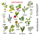 collection of herbs for angina... | Shutterstock .eps vector #537862597