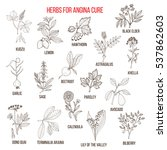 collection of herbs for angina... | Shutterstock .eps vector #537862603