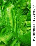 green leafs  | Shutterstock . vector #538105747