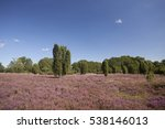 Landscape With Flowering...