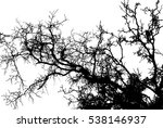 Tree Without Leaves Vector...