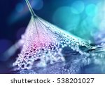 flower dandelion seeds in drops ... | Shutterstock . vector #538201027