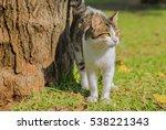 Yellow Eyed Cat Standing Near...