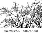 realistic tree branches... | Shutterstock .eps vector #538297303