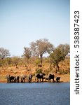 blur in south africa    kruger  ... | Shutterstock . vector #538387423