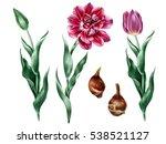 Botanical Illustration Of Pink...