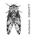 pen and ink drawing of a cicada ...   Shutterstock .eps vector #538562977