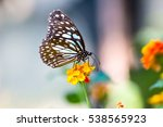 Stock photo soft focus butterfly on flowers beautiful butterfly flower in the garden 538565923