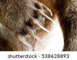 bear paw   Shutterstock . vector #538628893