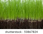 soil and grass | Shutterstock . vector #53867824