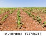 Farming Food Crops Farming...