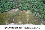 creep vine texture background... | Shutterstock . vector #538783147