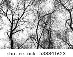 Tree Branch Silhouette On A...