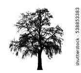 realistic oak tree silhouette ... | Shutterstock .eps vector #538853383