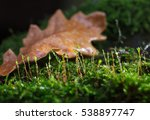 Small photo of Macro of water drops on green moss over one big oak (Quewrcus) abscessed leaf on forest floor in autumn after the rain