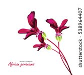 african geraniums  bouquet of... | Shutterstock .eps vector #538964407