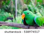 the magic bird   Shutterstock . vector #538974517