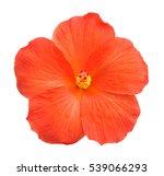 Stock photo beautiful single orange hibiscus flower isolated on white 539066293