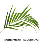 tropical palm leaf | Shutterstock . vector #539086093