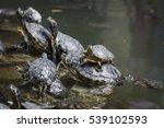 Western Painted Turtle ...