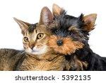 Stock photo puppy and kitten 5392135