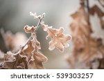 Beautiful Frozen Tree Branch...