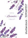 vector lavender flower elegant... | Shutterstock .eps vector #539369557