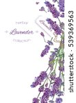 Vector Lavender Flower Elegant...