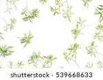 green leaves frame on white... | Shutterstock . vector #539668633