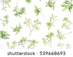 green branches pattern on white ... | Shutterstock . vector #539668693