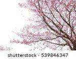 pink flower blossom on white... | Shutterstock . vector #539846347